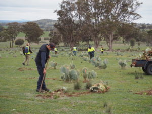 Cactus Warriors enjoy the outdoors while helping to control Wheel Cactus